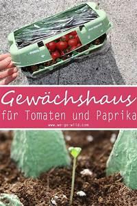 Gewächshaus In Der Wohnung : tomaten selber ziehen im eierkarton gew chshaus ~ Markanthonyermac.com Haus und Dekorationen