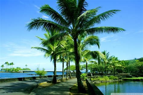 Top Hd Wallpapers Free Download About Hawaii