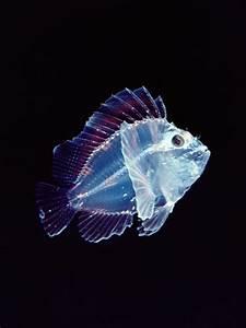 See-Through Animal Photos, Translucent Creatures ...
