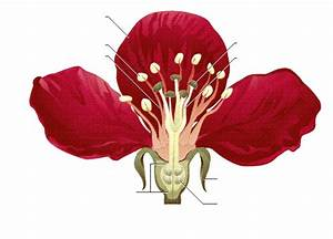 Aufbau Einer Blume : new page 1 ~ Whattoseeinmadrid.com Haus und Dekorationen