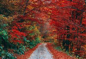 Fall, Foliage, Off, To, A, Slow, Start