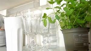 Plante Balcon Facile D Entretien : plante d 39 int rieur entretien facile pas ch re ~ Melissatoandfro.com Idées de Décoration