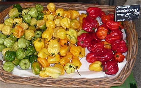 habanero chili pflanze kaufen habanero chili 50x sch 228 rfer als jalapeno pepperworld