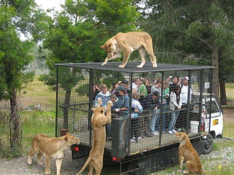 Animali In Gabbia - turisti in gabbia al posto degli animali in questo zoo