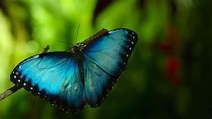 Bedeutung Schmetterling In Der Wohnung : schmetterling im reich der superzeitlupe zdfmediathek ~ Watch28wear.com Haus und Dekorationen