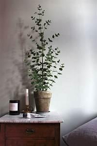 Eucalyptus En Pot : voici les plus belles plantes d int rieur pour donner de ~ Melissatoandfro.com Idées de Décoration
