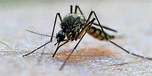 Was Essen Mücken : so halten sie m cken ohne chemie fern ~ Frokenaadalensverden.com Haus und Dekorationen