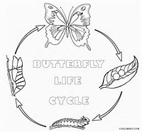 HD wallpapers coloring pages of a butterfly life cycle love