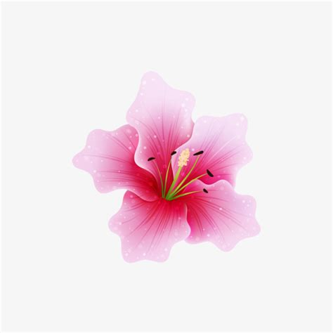 Flower No Background Flower Png Transparent Background Free Buckle Material