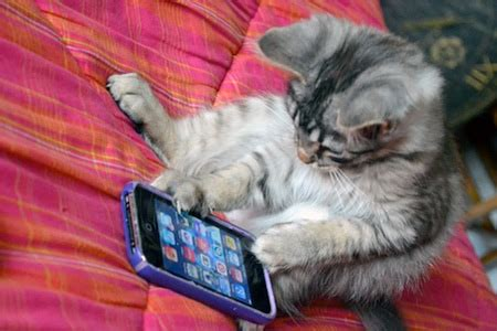 cat iphone newsworthy topics the daily kitten