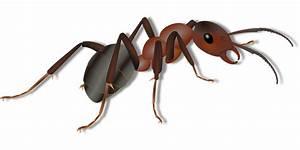 Hausmittel Gegen Ameisen Im Garten : hausmittel gegen ameisen was hilft gegen ameisen ~ Whattoseeinmadrid.com Haus und Dekorationen