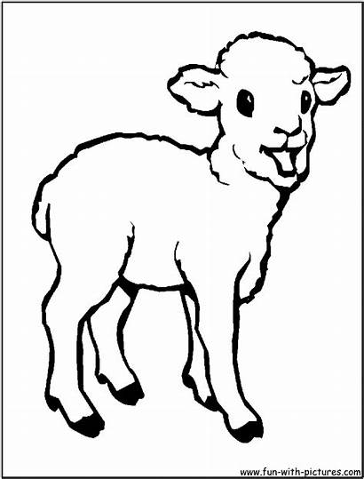 Coloring Animals Pages Lamb Sheep Printable Outline