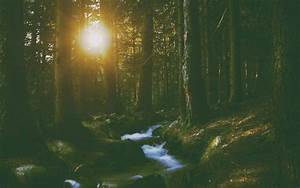 River, Forest, Wallpapers, Hd, Desktop, And, Mobile, Backgrounds