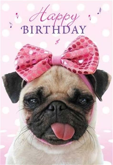 Happy Birthday Pug Meme - pug memes funny happy birthday pug meme collection