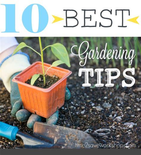 top 10 gardening tips garden like the pros 10 of the best vegetable garden planting tips