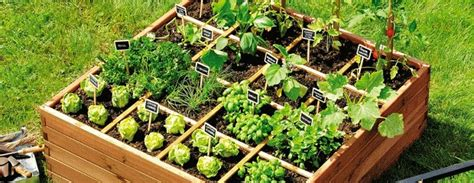 potager carr 233 9 plantes id 233 ales 224 cultiver jardiniers pro