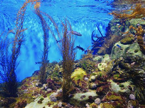 aquarium de reduction 28 images code promo juwel bons et codes de r 233 ductions juwel