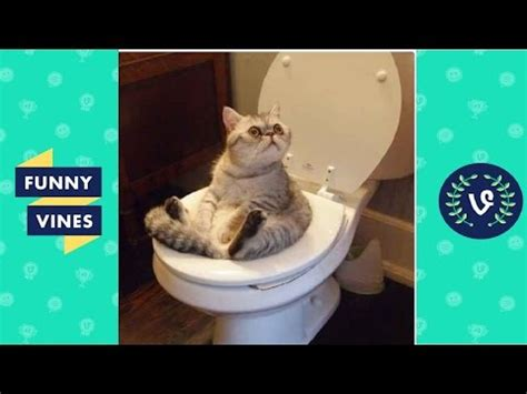 funny cats compilation   funny cat