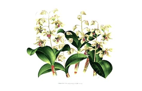 botanical drawing orchids plants philodendron apartment