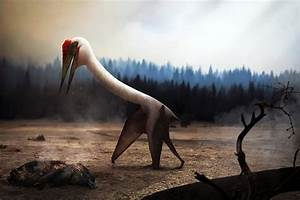 Quetzalcoatlus, the largest flying animal of all time ...  Quetzalcoatlus