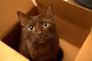 brown cat brown cat looking at