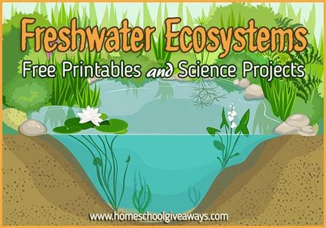freshwater ecosystems printables  projects
