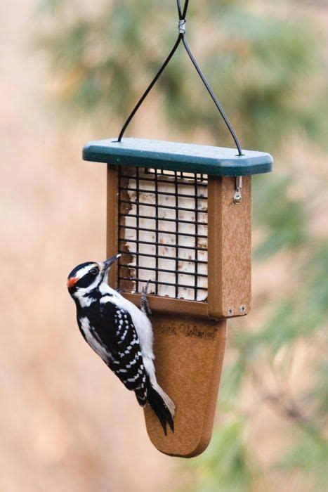birds unlimited bird feeders 18 best images about birds unlimited on