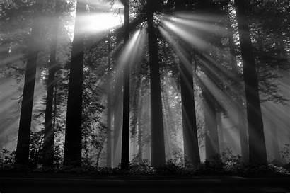 Forest Dark Nature Trees Sun Rays Fondos