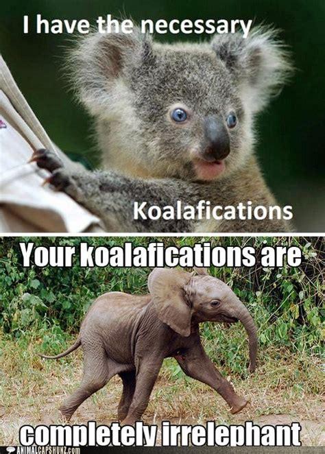 Elephant Meme - koala elephant puns together at last just yeah pinterest animal puns laughing and just love
