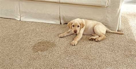 pet friendly hardwood floors dog friendly carpet carpet ideas
