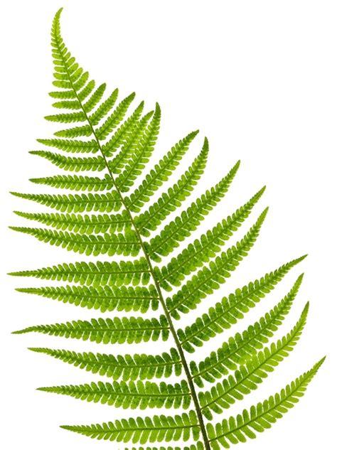 decorating  plants plants  purify  air