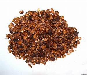 Рецепты из кедровых орешков при гипертонии