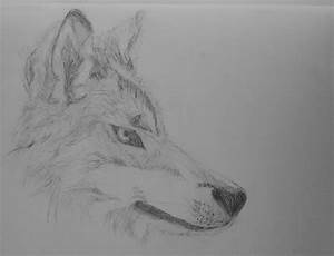 wolf head side drawing 2 by Sabs546 on DeviantArt