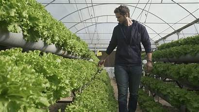 Hydroponic Farming Problem Ancient Solution Waya