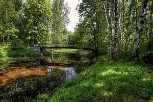 Wallpaper, St, Petersburg, Russia, Nevsky, Forest, Park, Birch, Nature