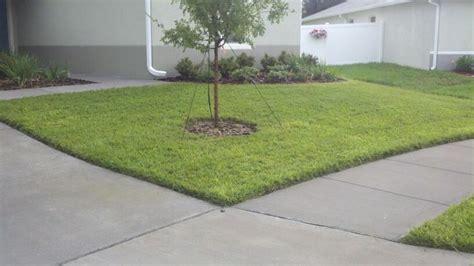 Bahia Grass Lawn.