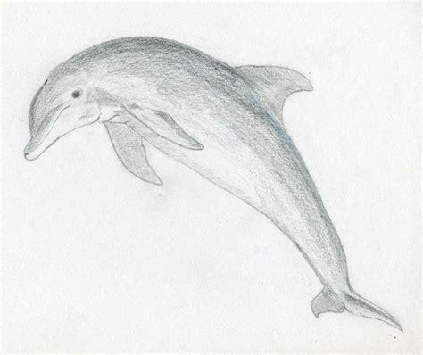 cool  easy pencil drawings easy pencil drawings