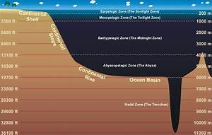 Week 19  Great Illustration Of The Ocean Zones  Continental Shelf And Continental Slope
