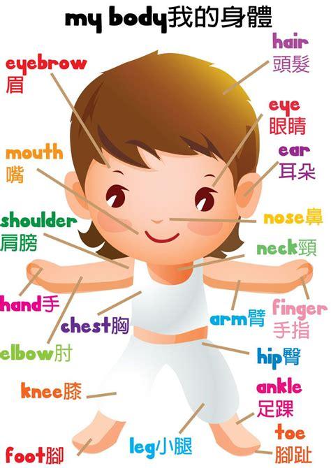 learn   body  printable  kids