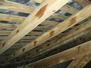 Traitement Bois Charpente : travaux de traitement bois et charpentes marseille ~ Edinachiropracticcenter.com Idées de Décoration