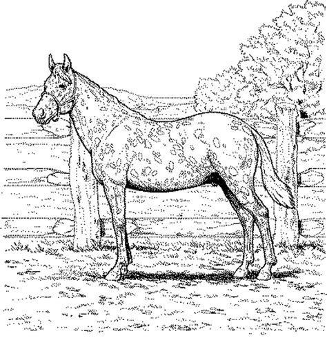 realistic horse coloring pages    print