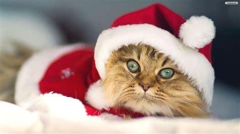 fond d écran mignon image fond d cran chaton mignon fonds d cran gratuits de chats et de chatons animaux fonds d
