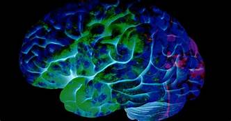 Could Lab-Grown Brains Develop Consciousness?…