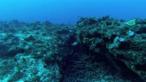 requin dormeur langouste requin dormeur sur 24m guadeloupe