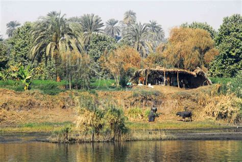 photo  nile river shelter  photo stock source house