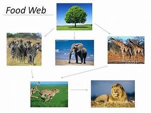 Pin Grassland Ecosystem Diagram On Pinterest