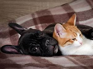 Do Dogs Hate Cats  Dog Myths Debunked
