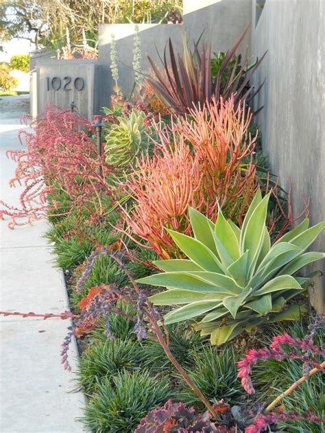 plants for a modern garden modern drought tolerant xeriscape garden even the desert is far from devoid of beautiful plant