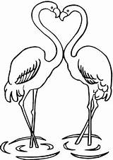 Flamingo Coloring Couple Pages Printable Flamingos Famingo sketch template