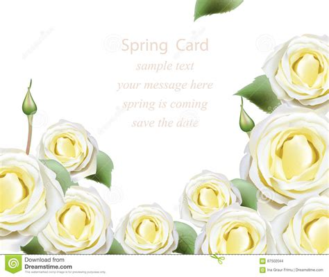 White Delicate White Roses Blossom Card Beautiful